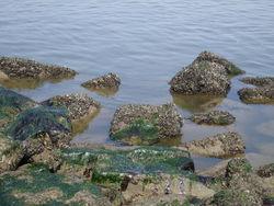 de stenen van de golfbreker